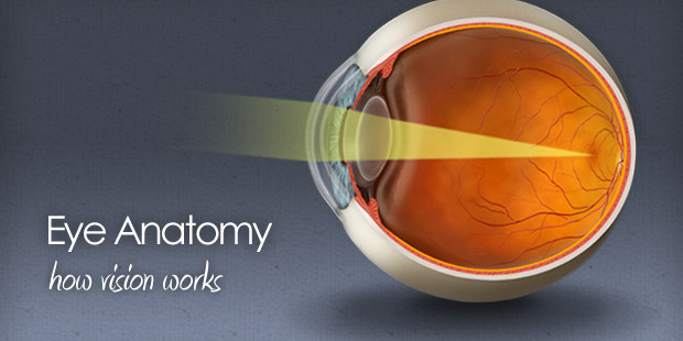 Eye anatomy - how vision works